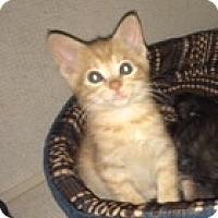 Adopt A Pet :: PEETA - Hamilton, NJ