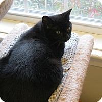 Adopt A Pet :: Mena - Ashland, MA