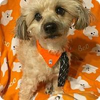 Adopt A Pet :: FOZZIE - Hurricane, UT