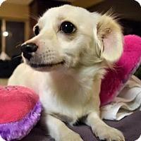 Adopt A Pet :: Rochelle - Sacramento, CA