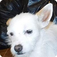 Adopt A Pet :: Scotty - MINNEAPOLIS, KS