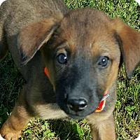 Adopt A Pet :: Roscoe - Rochester, NY