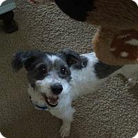 Adopt A Pet :: Shy - Whitestone, NY