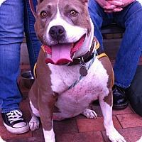 Adopt A Pet :: NINA - Ojai, CA