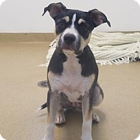 Adopt A Pet :: Rani - Miami, FL