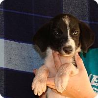 Adopt A Pet :: Kyoko - Oviedo, FL