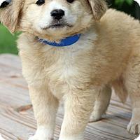 Adopt A Pet :: Irwin - Waldorf, MD
