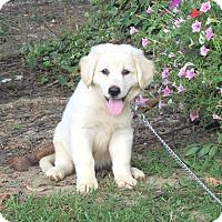 Adopt A Pet :: BAILEE - Hartford, CT