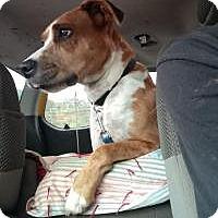 Adopt A Pet :: Bruce - Bakersville, NC