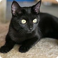 Adopt A Pet :: Raven - Columbia, TN
