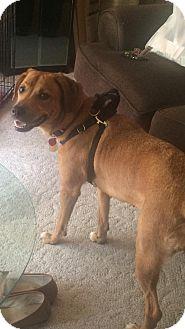 Hound (Unknown Type)/Hound (Unknown Type) Mix Dog for adoption in Fairfield, New Jersey - Bella