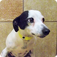 Adopt A Pet :: Dottie *Petsmart GB* - Appleton, WI