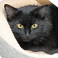 Adopt A Pet :: Alana - Bonsall, CA