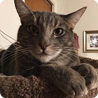 Adopt A Pet :: Juice - Parlier, CA