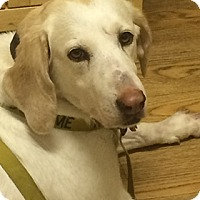 Adopt A Pet :: Maddie - Broomfield, CO