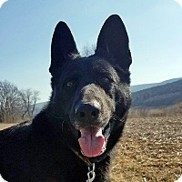 Adopt A Pet :: Portia - New Ringgold, PA