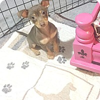Adopt A Pet :: Gabriel - Brea, CA