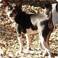Adopt A Pet :: Ariella - Jacksonville, FL