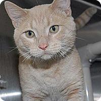 Adopt A Pet :: Ethan - Eagan, MN