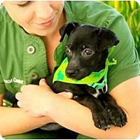 Adopt A Pet :: Bonnie - Mission Viejo, CA