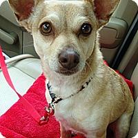 Adopt A Pet :: Tyler - Sneads Ferry, NC