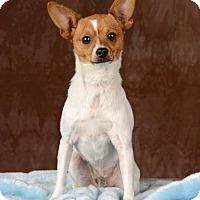 Adopt A Pet :: Brewster - Henderson, NV