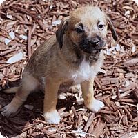 Adopt A Pet :: Peony - La Habra Heights, CA
