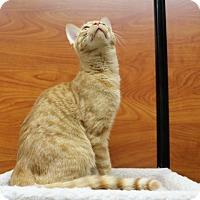 Adopt A Pet :: Oliver - Greensboro, GA