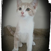 Adopt A Pet :: Harvest - Richmond, VA