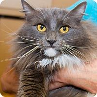 Adopt A Pet :: Dorothea - Irvine, CA