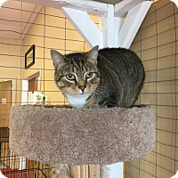Adopt A Pet :: Lilly - Branson, MO