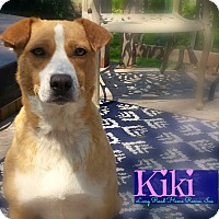 Adopt A Pet :: Kiki - Manhasset, NY
