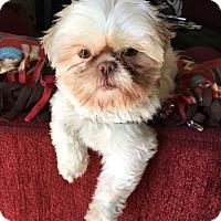 Adopt A Pet :: MOpending - Eden Prairie, MN
