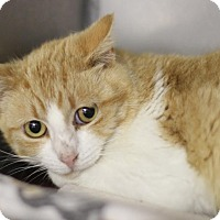 Adopt A Pet :: Cream Soda - BARN - Midland, MI