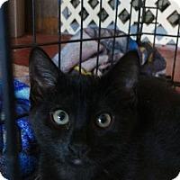 Adopt A Pet :: Lilly - Brainardsville, NY