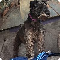 Adopt A Pet :: TUCKER - Cincinnati, OH