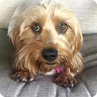 Adopt A Pet :: Azalea - Weston, FL