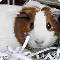 Adopt A Pet :: Jelly - Long Beach, CA