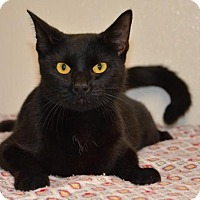 Adopt A Pet :: Sheba-adoption approved - DuQuoin, IL