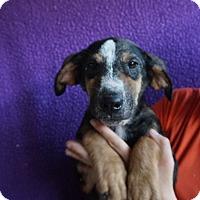 Adopt A Pet :: Maia - Oviedo, FL