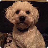 Adopt A Pet :: Carter 2016 (m/c)ADOPTION PEND - Chesterfield, MI