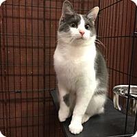 Adopt A Pet :: Mr. Bojangles - Lexington, KY