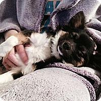 Adopt A Pet :: Potter - Saskatoon, SK