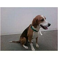 Adopt A Pet :: Midori - Phoenix, AZ