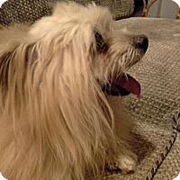 Adopt A Pet :: Taffy - San Dimas, CA