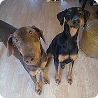Adopt A Pet :: Malikiah - Allegan, MI