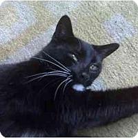Adopt A Pet :: Johanna - Summerville, SC