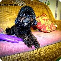 Adopt A Pet :: cisero - Gadsden, AL