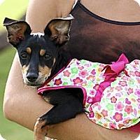 Adopt A Pet :: GG - Phoenix, AZ