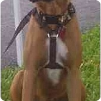 Adopt A Pet :: Mindy - Miami, FL